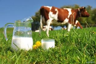 Молочные продукты для киоска