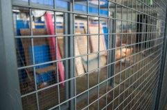 Отделка стен и створок выполнена сварной арматурной сеткой